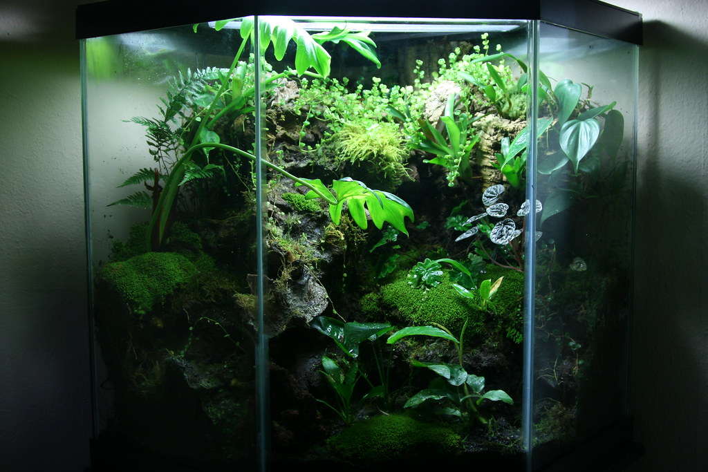 updated 44 gallon   i took some updated pictures so i ... 10 Gallon Dart Frog Vivarium