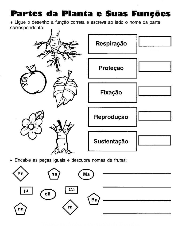 Partes da planta e suas funções  Professora Gra  Flickr