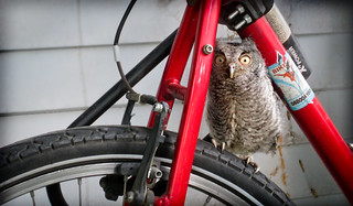There's an owl on my bike! | by Adam Norwood