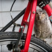 There's an owl on my bike!