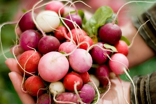 {201} a handful of radishes. | by jen_maiser