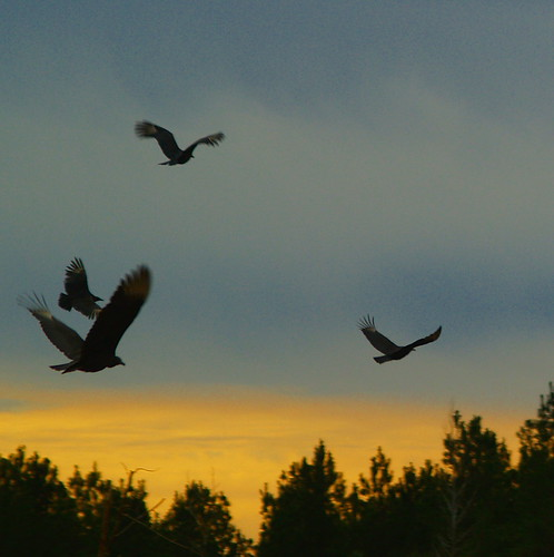 """Evening Flight"" 