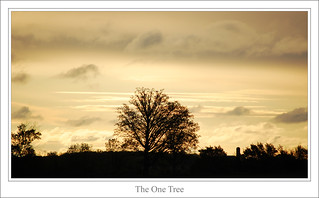 The One Tree | by Jeff Power