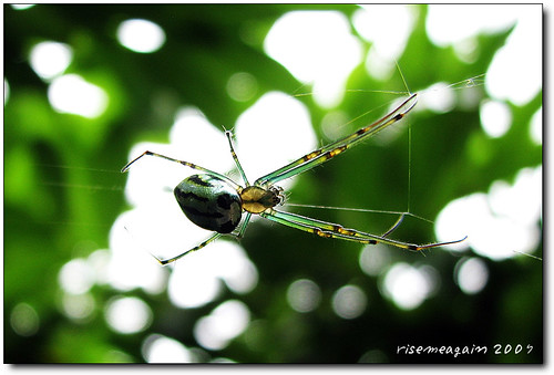I'm a simple spider,I dance with myself... | by risemeagain©