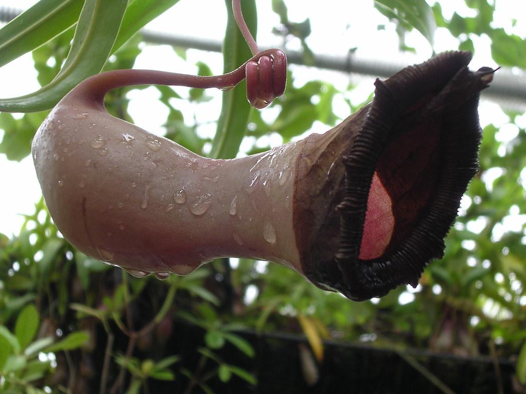 vaginal flower   atlanta botanical gardens   superk8nyc