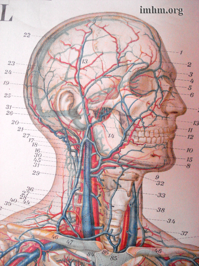 Antique Medical Posters (close-up) | Anatomy instructional c… | Flickr