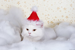 Santa Claws... | by Oliver Pietern
