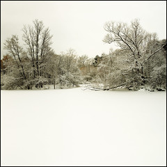 Cold, White | by Michael Chrisman