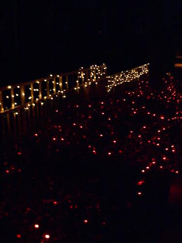 Moody Gardens Christmas Lights