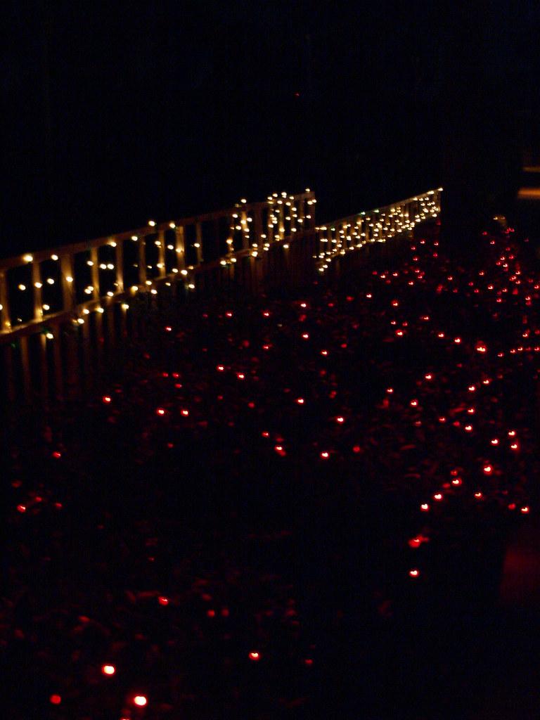 Galveston Texas Moody Gardens Christmas Festival Of Lights