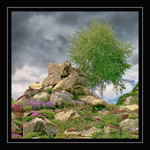 Stones and a tree | by regina_austria