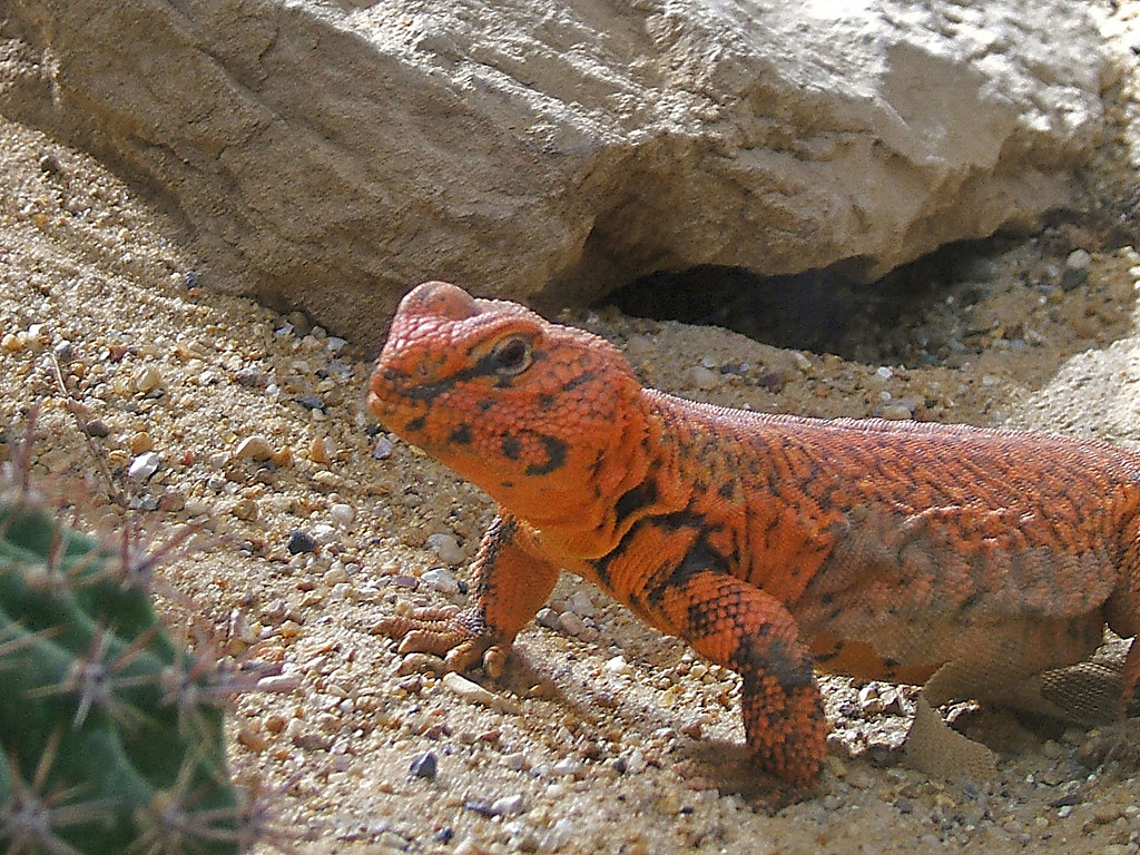 Orange Lizard | Squeezyboy | Flickr