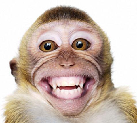 happy monky