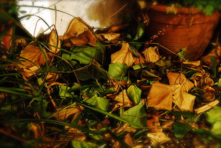 Autumn leaves | by Rhodri Evans