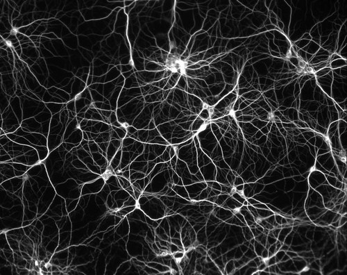 neurons | by leeander