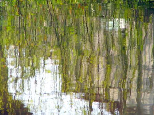 Een groen gordijn van blaaren reflectie in het water flickr - Groen behang van het water ...
