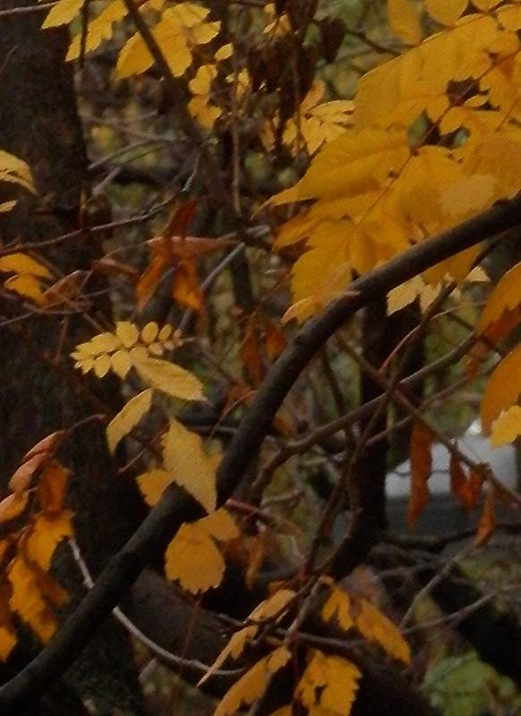 Leaves that left