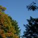 Fall Foliage 2007