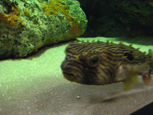 Manteo Aquarium Outer Banks