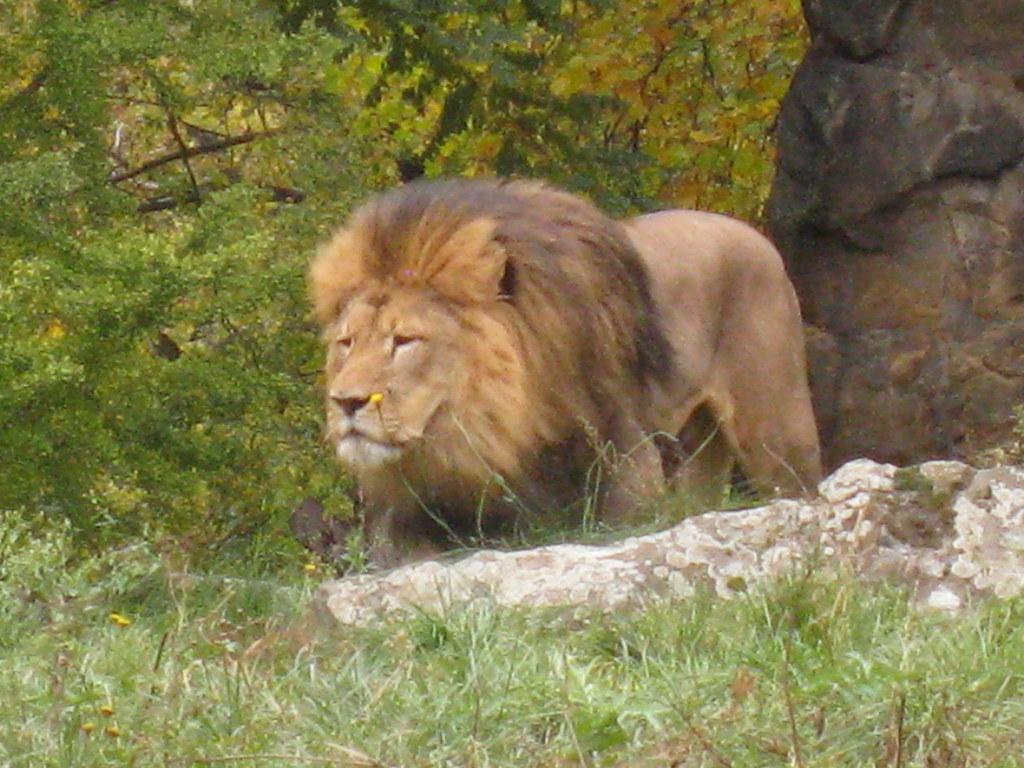 Gli animali dello zoo di berlino il re della foresta - Gli animali della foresta pluviale di daintree ...