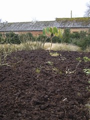 Mulched Border | by James's GW Blog