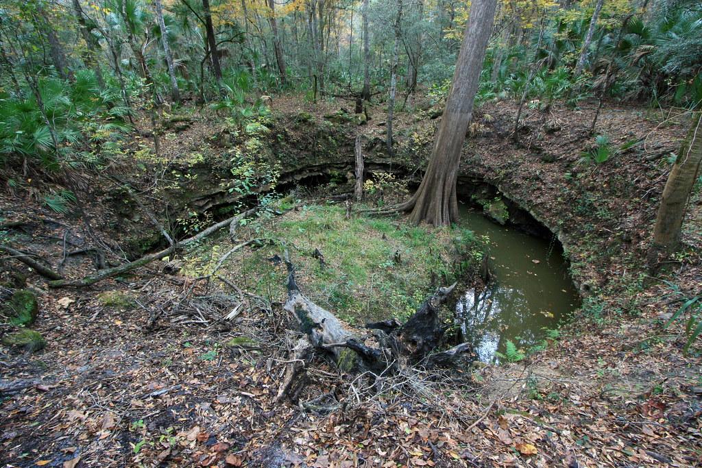 Cypress Sink Aucilla River Sinks Aucilla Wildlife Manage