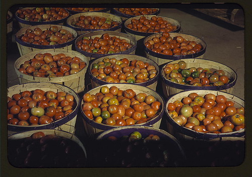 Tomatoes at the Yauco Cooperative Growers' Association, Puerto Rico  (LOC) | by The Library of Congress