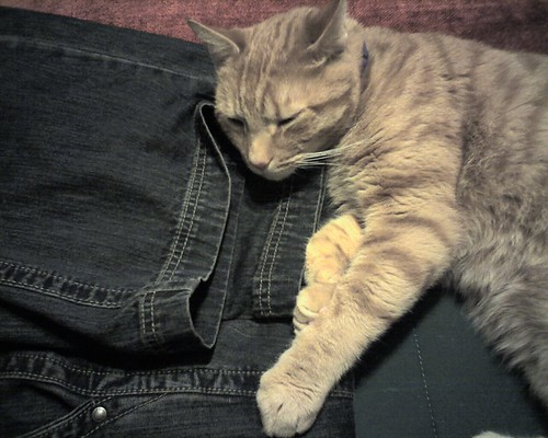 Cats Love Denim | by brainwise