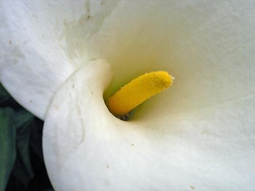 White flower yellow center rjs100mzk flickr white flower yellow center by rjs100mzk mightylinksfo Images