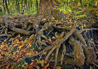 Roots | by BossBob50