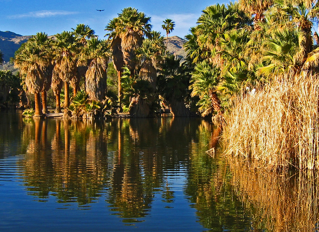 Agua Caliente Park An Oasis In Tucson This Park Is Lite Flickr