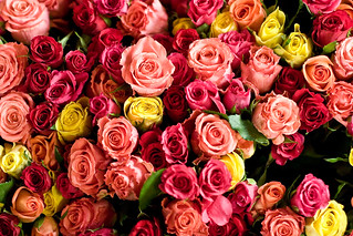 Fair Trade Roses | by teenytinyturkey