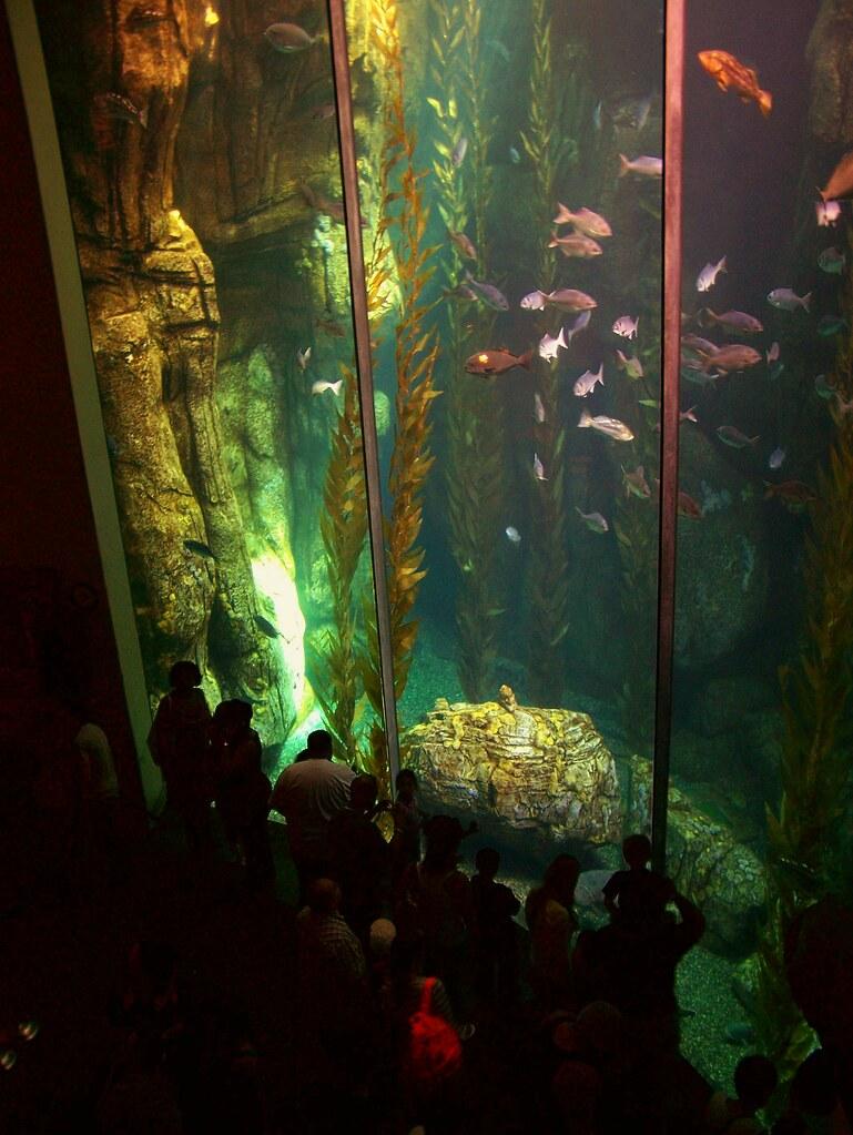 tall fish tank pacific aquarium jen c flickr