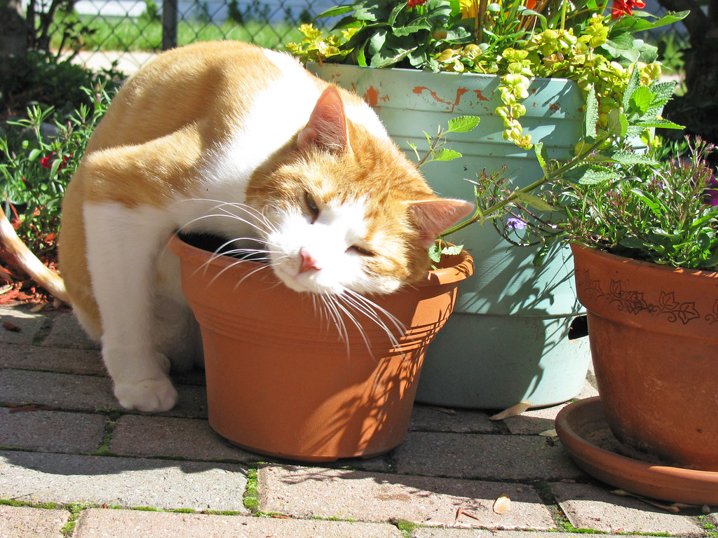 Can Cat Nip Be Used For Litter Training