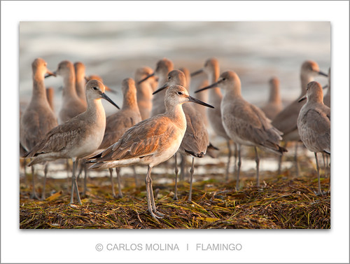 THE SOCIAL NETWORK...... | by carlosm76