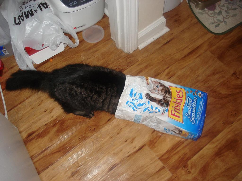 A Frisky Cat | Mia's new wig. | Tyler Meyer | Flickr
