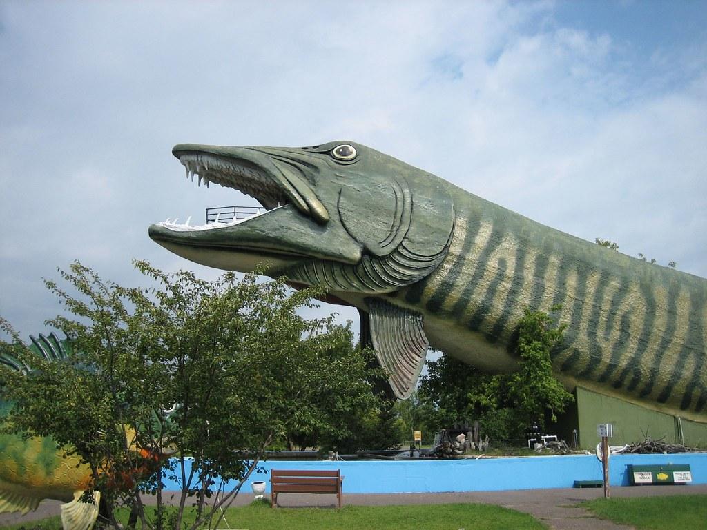 World 39 s largest fish national freshwater fishing hall of for Freshwater fishing hall of fame