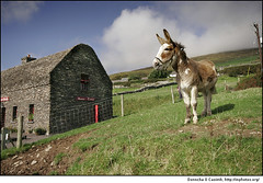 Lonesome Donkey | by Donncha Ó Caoimh