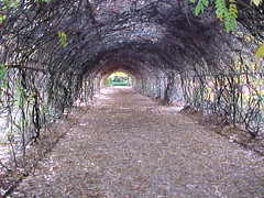 Tree_tunnel_bot_gdns | by Gr8 Cashman