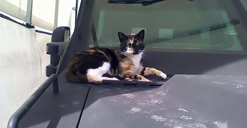 cops-build-stray-swat-cat-condo-cover