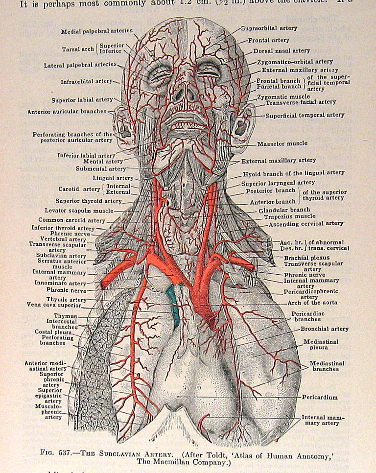 1933 Vintage Anatomy Book Plate Nina Flickr