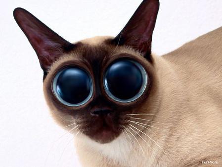 Big Eye Cat | Some funny eyes | Medvedi Petrovici | Flickr