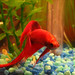 My fighter fish isn't much of a fighter..