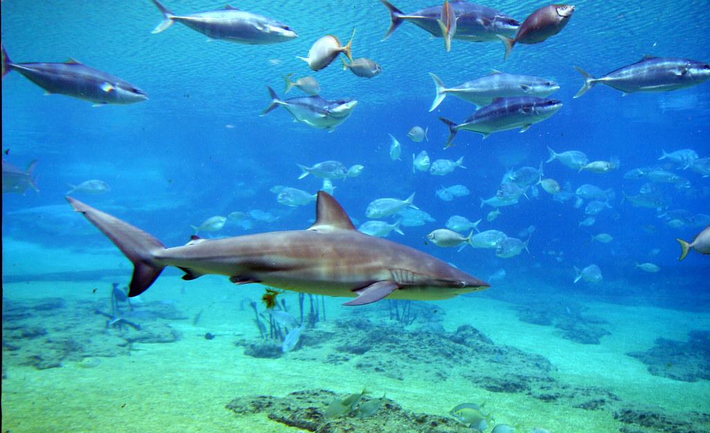 Shark Bay Map Shark Bay | by