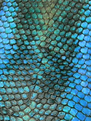 Alligator Skin Picture Frame