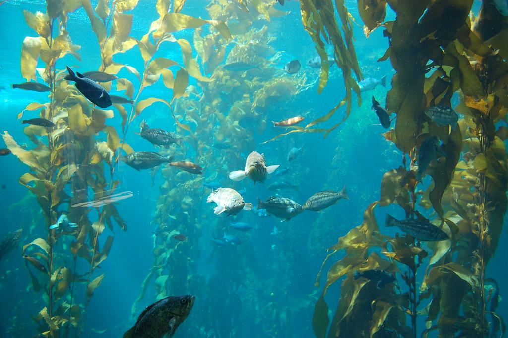 Photo D Aquarium Amazonien Decore Avec Des Souches Et Plantes