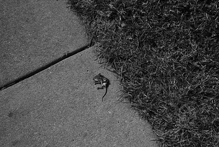Dead Mouse, March, 2008 | by Maggie Osterberg