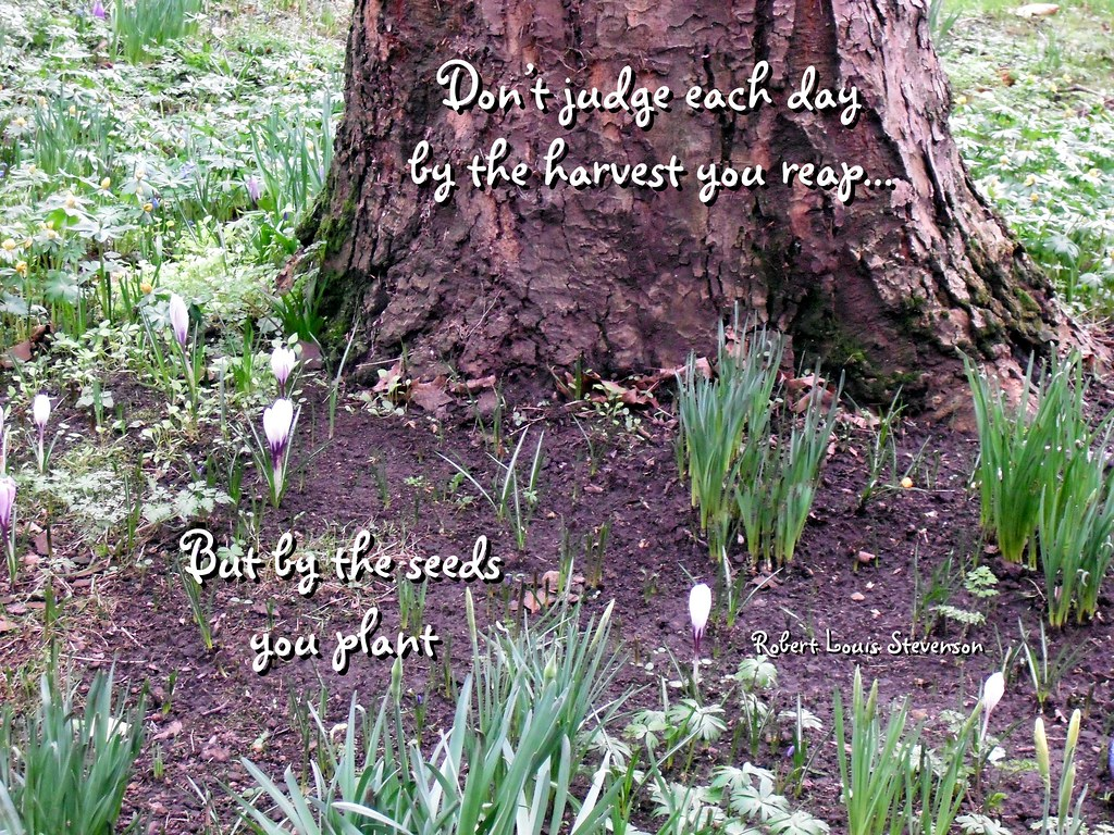 Image result for plant seeds quotes