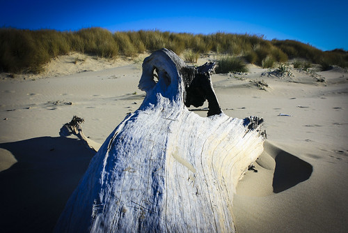 Driftwood - Oregon Coast | by Deep Owl
