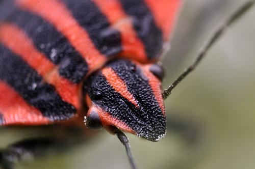Bug shot essay